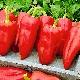 Перец «Джипси F1»: характеристика сорта и особенности выращивания