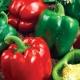 Перец «Калифорнийское чудо»: особенности и выращивание