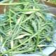 Популярные рецепты приготовления маринованных стрелок чеснока