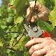 Правила ухода за виноградом весной