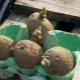Проращивание картофеля перед посадкой: эффективные методы и рекомендации