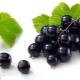 Рецепты заготовок на зиму из черной смородины