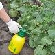 Способы обработки огурцов в теплице от болезней и вредителей