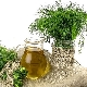 Укроп и фенхель: чем отличаются растения, каковы их особенности?