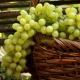 Виноград «Августин»: особенности сорта и тонкости выращивания