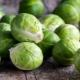 Всё о брюссельской капусте: выращивание и способы приготовления