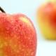 Яблоки «Гала»: описание сорта, разновидности, калорийность, польза и вред
