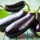 Баклажаны: польза и вред для здоровья, советы по приготовлению