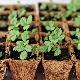 Как вырастить землянику из семян в домашних условиях на рассаду?