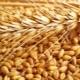 Классификация пшеницы и параметры определения качества зерна