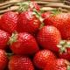 Клубника «Даренка»: характеристика сорта и выращивание