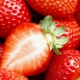 Клубника – это орех или ягода и другие интересные факты