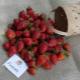 Клубника «Фурор»: описание сорта и выращивание