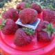 Клубника «Рубиновый кулон»: описание сорта и выращивание