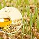 Масло зародышей пшеницы в косметологии: польза и вред, свойства и советы по применению