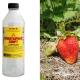 Нашатырный спирт для клубники: польза и вред, способы применения