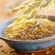 Недробленая овсяная крупа: польза, вред и рецепты приготовления