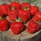 Описание сорта и выращивание клубники «Витязь»