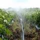 Особенности полива клубники во время цветения