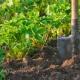 Почва для клубники садовой: какая подойдет и как подготовить своими руками?