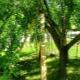 Подпорки для яблонь: как изготовить самому, защитив дерево от разломов, а урожай – от гибели?