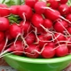 Редис для похудения: польза, вред и варианты диет