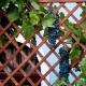 Шпалера для винограда: размеры, устройство, чертежи и установка