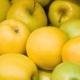 Сорта яблок: разновидности и их описание