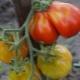 Томат «Японский трюфель»: описание сорта и процесс выращивания