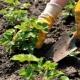 Тонкости процесса посадки клубники летом