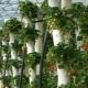 Вертикальные грядки для клубники: разновидности, изготовление, особенности выращивания
