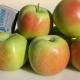 Яблони сортовой группы «Синап»: описание разновидностей, посадка и уход