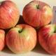 Яблоня «Юбиляр»: описание сорта и секреты посадки