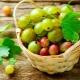 Какие витамины содержатся в крыжовнике?