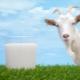 Козье молоко для грудничка: когда и как можно давать?