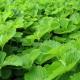 Листья клубники: свойства, сбор и применение