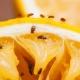 Откуда берутся мошки на фруктах и как избавиться от них?