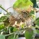 Паутина на яблоне: причины возникновения и способы устранения
