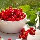 Польза и вред красной смородины для здоровья