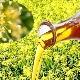 Рыжиковое масло: состав, свойства и применение