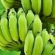 Зеленые бананы: особенности, свойства и правила употребления