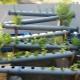 Что такое гидропоника и как выбрать оборудование для выращивания овощей?