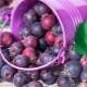 Ирга: как выглядит и где растет ягода, каковы ее свойства и как вырастить культуру?