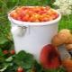 Какие ягоды растут в северных регионах?
