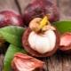 Калорийность, польза и вред мангустина