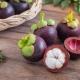 Мангостин (мангостин, мангостан): особенности фрукта, его применение и советы по выращиванию