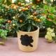 Паслен комнатный: описание и тонкости выращивания растения