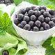 Польза и вред черной смородины при беременности