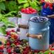 Съедобные ягоды