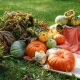 Сезонные овощи